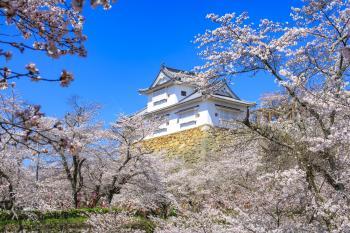 春の津山城