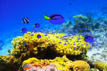 生分解性成分配合で地球にもサンゴにも優しい