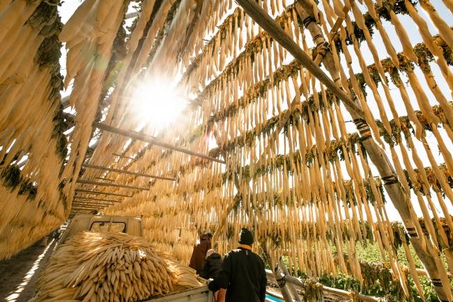 宮崎平野の冬の風物詩「大根やぐら」のある風景