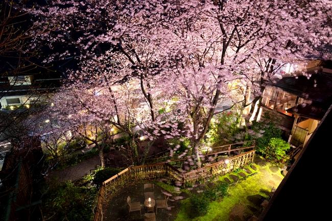 「吉祥CAREN」テラスの夜桜