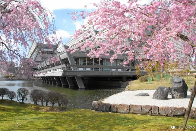 国立京都国際会館 池側からの建築美と桜