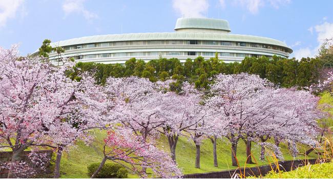 例年のホテル周辺 桜並木の様子