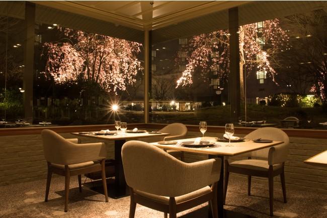 メインダイニング いと桜 夜のライトアップの様子