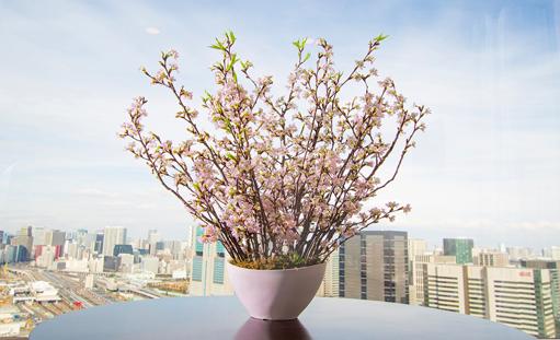 桜の生花アレンジメント