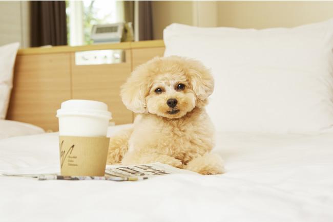 グランドプリンスホテル新高輪「ドッグフレンドリールーム」 イメージ