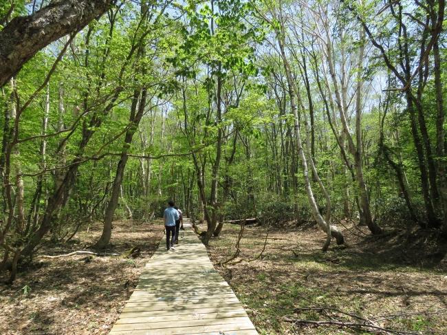 新緑の木々に癒されるボードウォーク