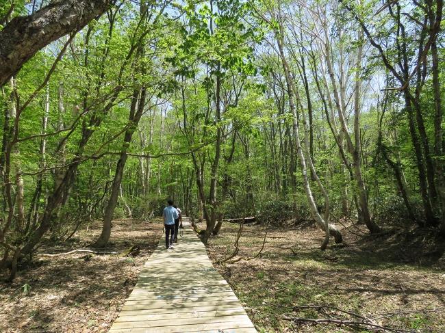 新緑の木々に癒やされるボードウォーク