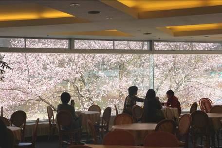 レストラン アゼリアから見る桜 イメージ