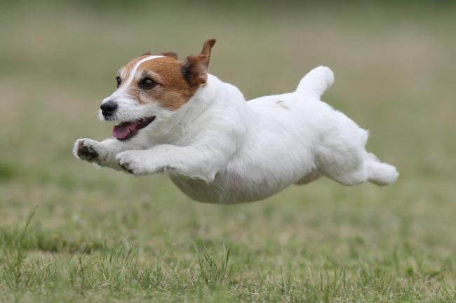 飛行犬 1
