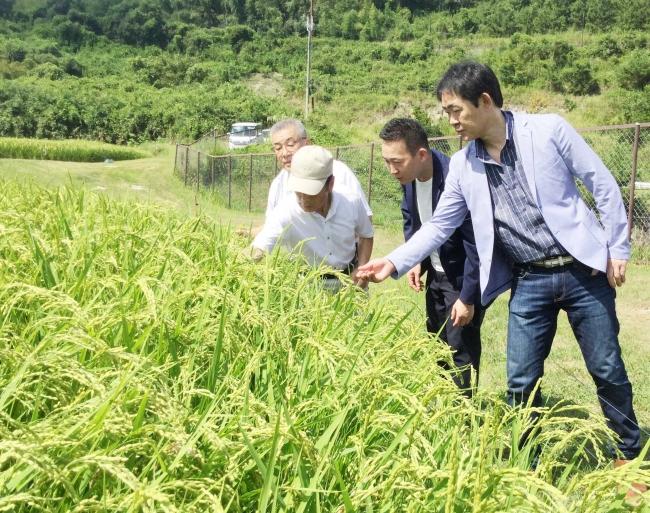 9月に三木市内の「山田錦」圃場を訪問した小笠原靖彦(右)と木下学(右から2人目)