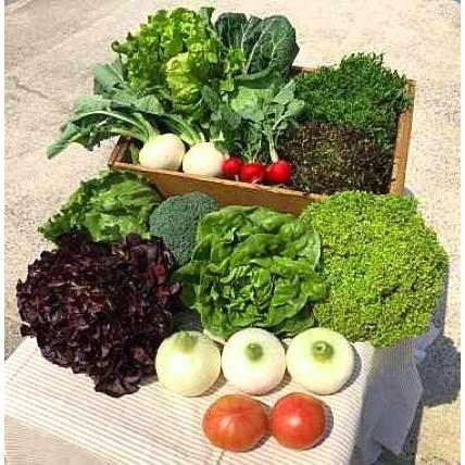 ② 淡路野菜のお楽しみセット