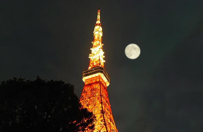 東京タワーとのコラボも美しい