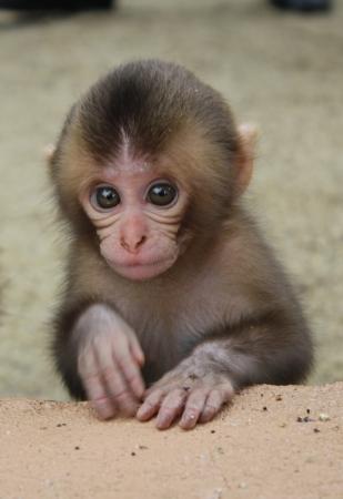 猿の画像 p1_36