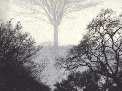ゲニウスロキ (青山練兵場と 現在の樹) 235 mm x 178mm  和紙、ミクストメディア