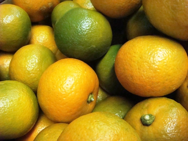 橙オレンジは生食には向かないビターオレンジ。代々と橙を掛け、縁起の良いオレンジとしてお正月飾りにも使われます
