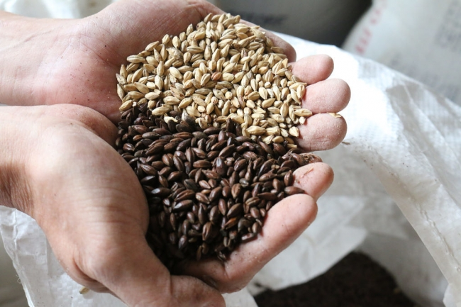 チョコレート麦芽(手前)とベース麦芽(奥)