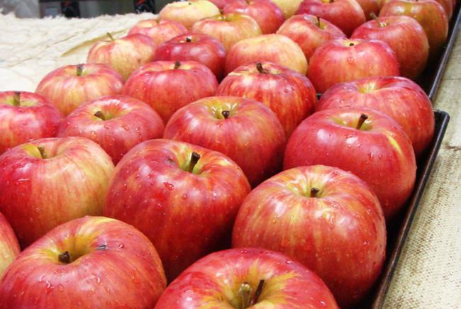 りんごは長野県伊那市産