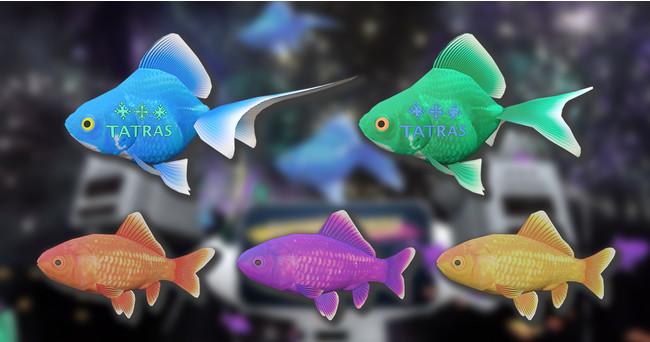 タトラス金魚(上列)と普通の金魚(下列)