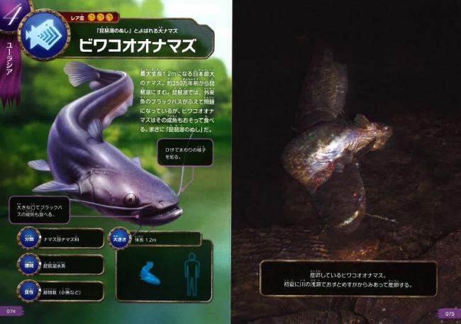 ▲ビワコオオナマズは日本に住む代表的な怪魚だ!