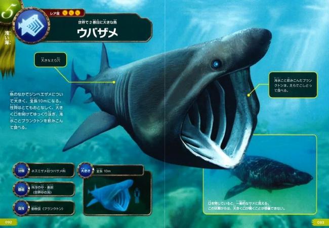 ▲ウバザメの口の大きさにはただただ驚きだ