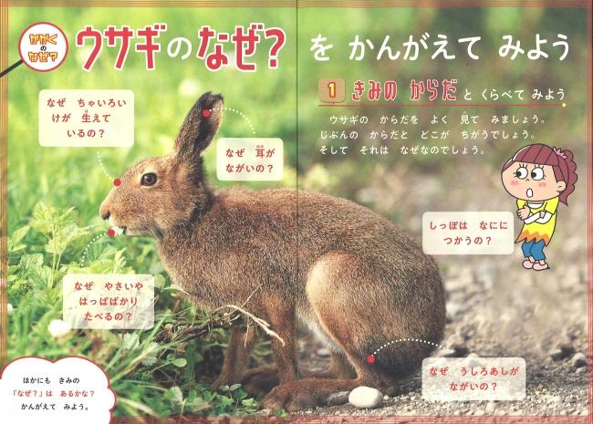 ▲ウサギのなぜ? をかんがえてみよう(1年生)