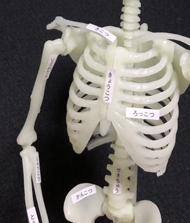 シールで骨の名前が覚えられる!