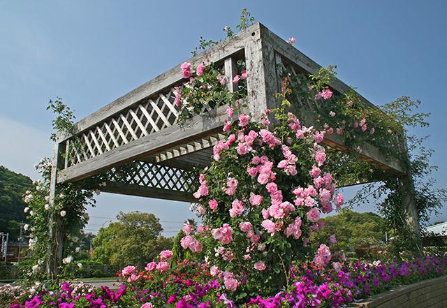 バラ園イメージ(写真は春季開催時)