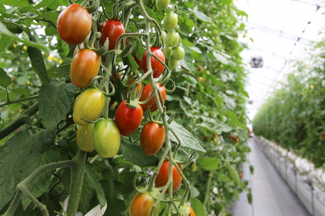 全国トップクラスの農業産出額を誇る、農業王国・豊橋