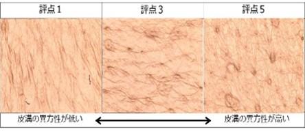レプリカの皮溝の異方性