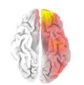 手によるマッサージ後、内側前頭前野・前帯状回が活性化している様子