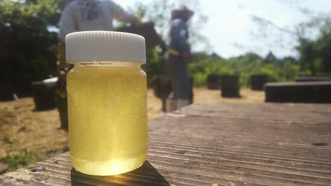 採れたてのフレッシュな蜂蜜