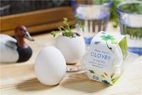 Happy Egg きっと見つかる幸せの四つ葉のクローバー栽培セット / タキイ種苗(株)