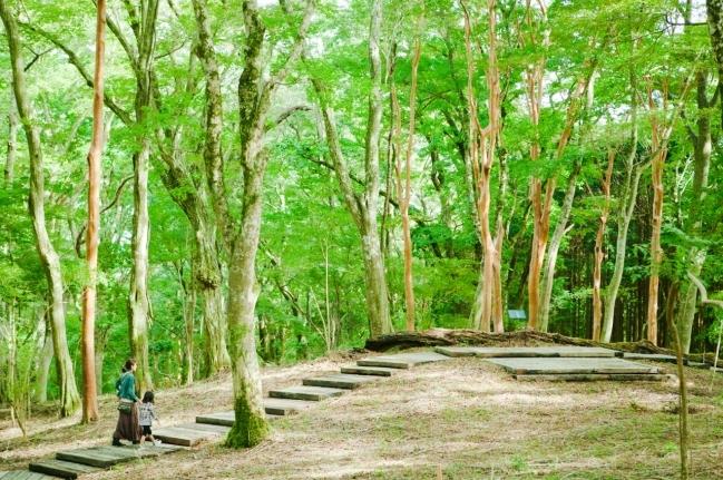 ポーラ美術館 森の遊歩道