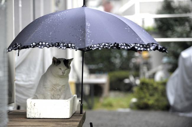 傘の下で雨宿りをしているぽー