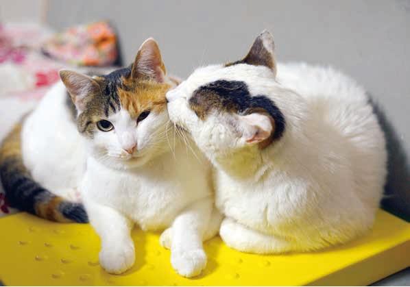 他の猫を愛でるぽー