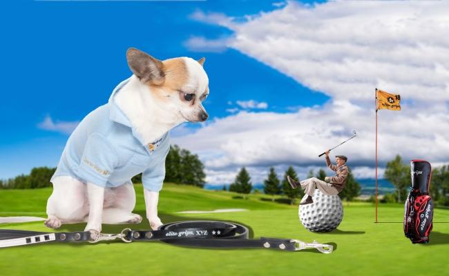 愛犬とゴルフを楽しむ時代を進化させる、オリジナルブランド「Inu to Golf」が12月7日(水)に誕生。ゴルフブランド「エリートグリップ」とコラボしたリードと、犬のゴルフウェアを発売。