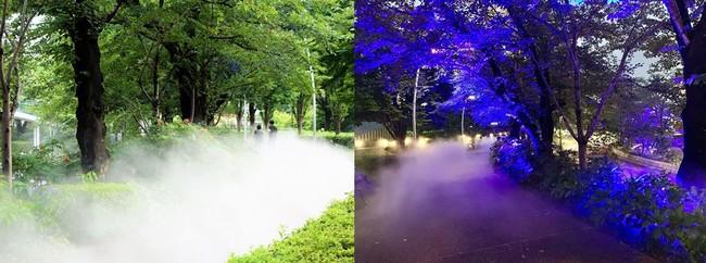 左:ひんやりとした薄霧の中で散歩を 右:青色のライトアップと夜霧でよりいっそう幻想的な空間に