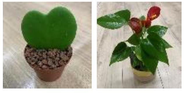 左:9φ観葉植物(小鉢込み)¥1,500 右:6φ観葉植物(小鉢込み) ¥900