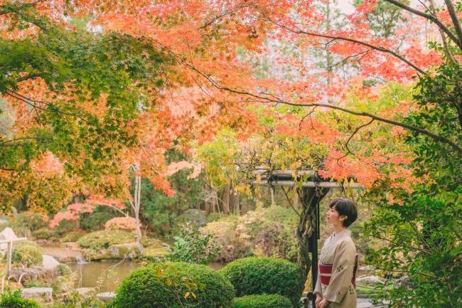 古刹の紅葉を愛でる。静けさのなかに燃え立つ紅葉を眺める贅沢な着物時間。