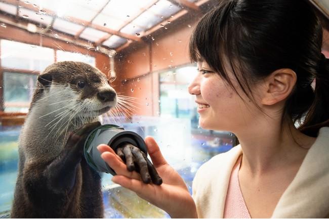 握手が出来る「ひらりくん」は、全国の水族館・動物園が参加した第二回カワウソゥ選挙(カワウソの人気投票イベント)で双子の「きらり」と一緒に人気No1に選ばれました。