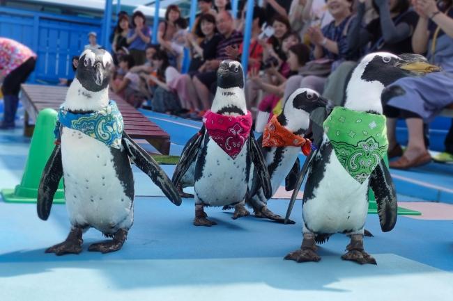 何処に行くかはペンギン次第。ちゃんとゴールまで行けるかな?