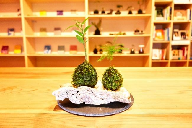 ▲伊勢苔玉作り体験では夏限定で海をイメージした鳥羽の牡蠣殻を選んで頂けます。