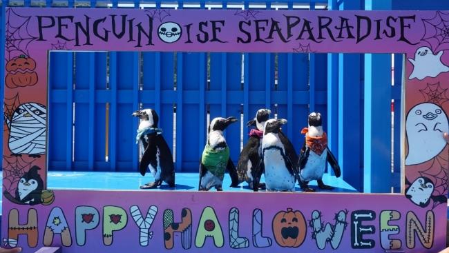 記念撮要のフレームを使用してペンギン達が記念撮影にチャレンジ!