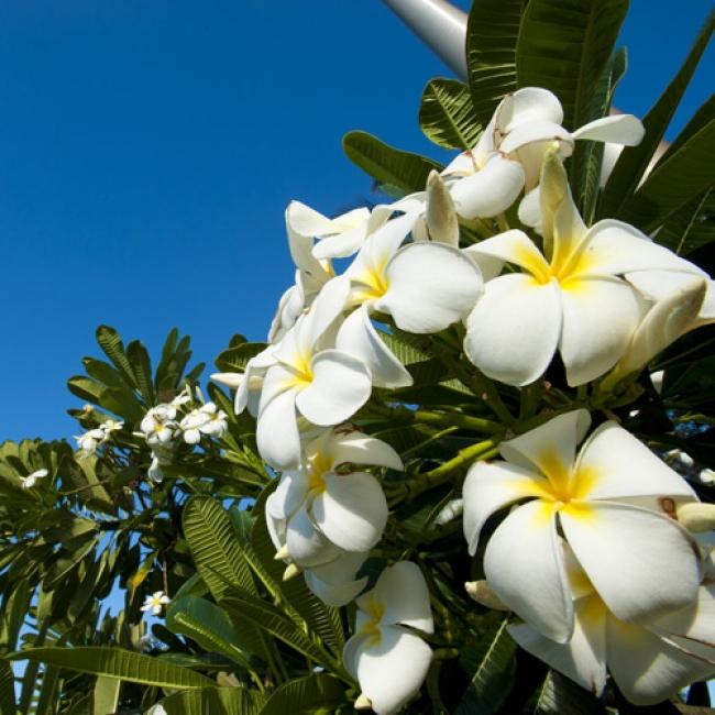 Lani Hawaii