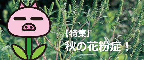 花粉 2020 カモガヤ