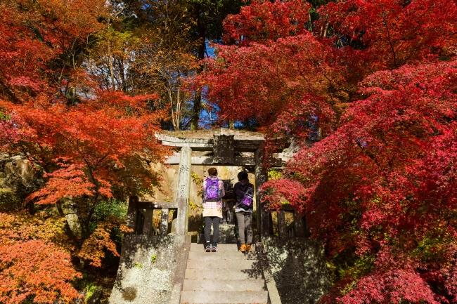 武雄の秋を体験しよう「九州オルレ 武雄コース」