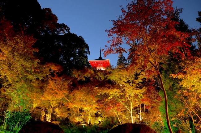 高野寺の紅葉ライトアップ