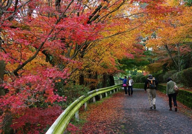 ◇有田町歴史民俗資料館の紅葉