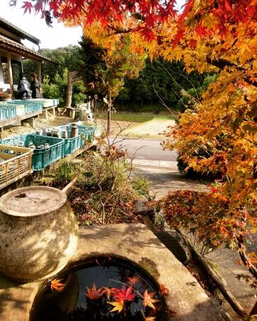 秋の窯開き 亀翁窯