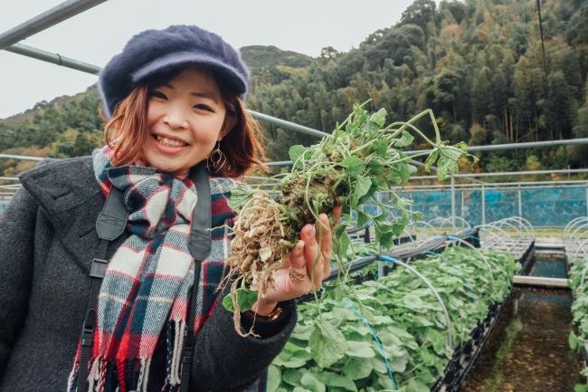 九州最大規模のわさび苑 多良岳「収穫体験プログラム(平日予約制)」